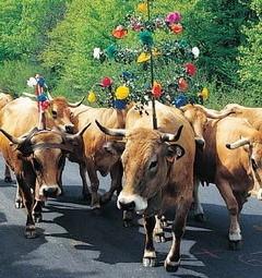Folklore Languedoc-Roussillon vakantiehuis-Frankrijk