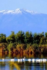Languedoc Roussillon vakantiehuisje-huren-zuid-frankrijk